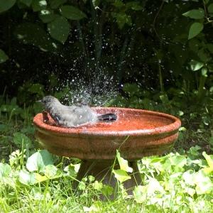 Bathing by hlkljgk CC BY-SA 2.0