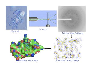 Crystal Images from Macromolecular Crystallization and Crystallography, UM-Life Sciences Institute